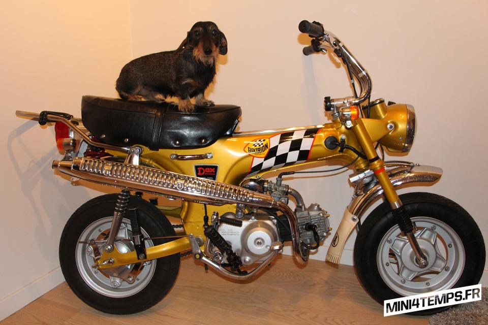 Le Honda Dax Daxhund - mini4temps.fr